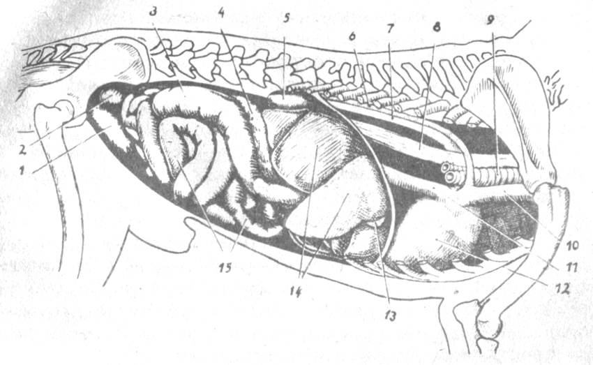 Можно ли лечить грибок мазь. вишневского