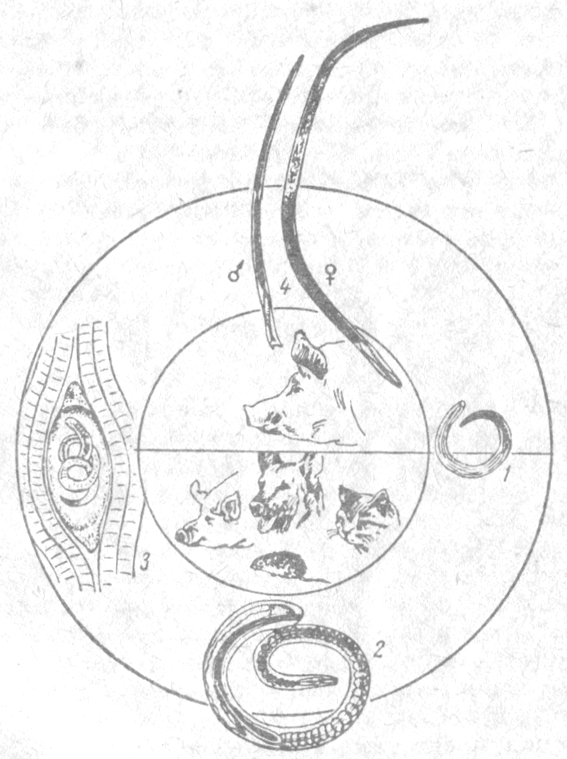 микроорганизмы паразиты человека